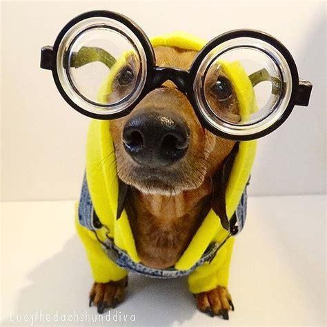minion dogs minions costumes popsugar pets