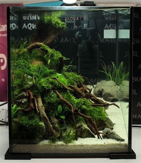 aquascape ideas tropical 122 best images about aquascape on pinterest photo