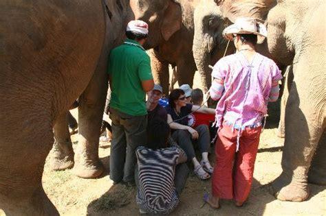 Lu Tidur Tempel naik gajah ke wat tham pha thailand liburkeluarga