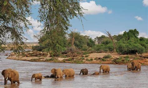 small kenya safari with airfare from odyssey safaris in masai mara reserve groupon getaways