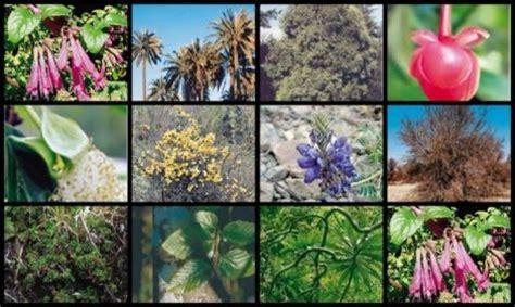 imagenes animales y plantas en peligro de extincion animales en peligro de extincion peru buscar con google