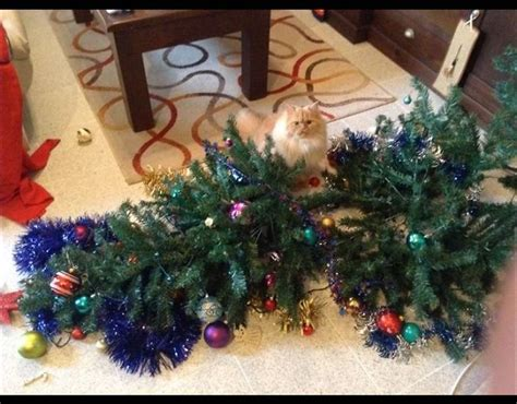 cat standing next to fallen christmas tree when pets go