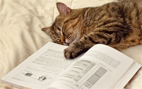 wallpaper cat book cat sleeping lying paw humor books wallpaper 1680x1050