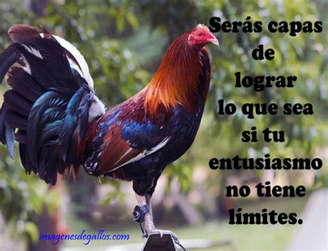 imagenes gratis de gallos con frases imagenes de gallos de pelea con frases positivas para