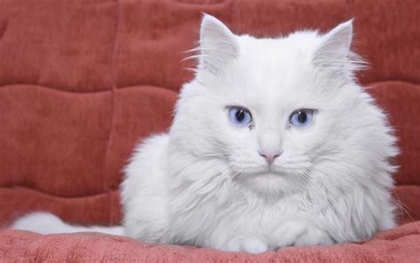 7 Genes That Control Your Cat?s Fur Color   Catster