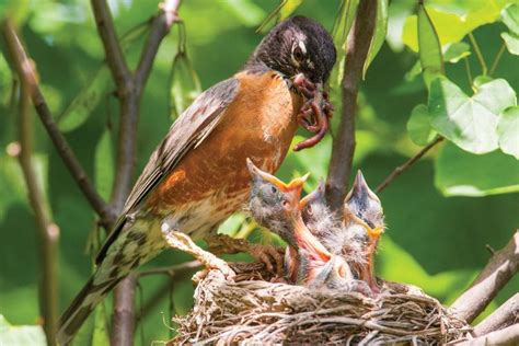 what s in a nest missouri department of conservation