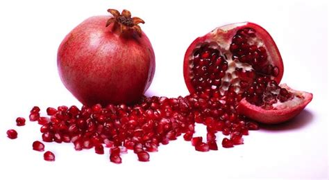 can dogs eat pomegranate η εποχή του ροδιού press4dogs