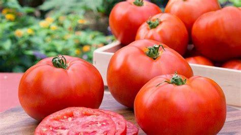 manfaat tomat  menangani masalah jerawat  komedo