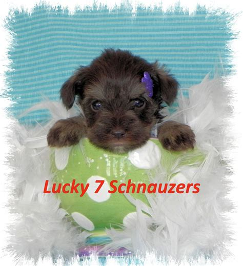 best kid friendly dogs lifestyle dogs best kid friendly dogs find out the best breeds for breeds picture