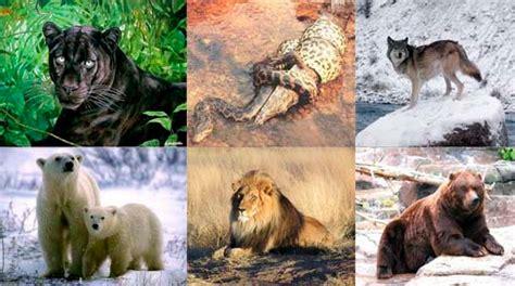 imagenes animales herbivoros carnivoros y omnivoros 4 clasificaci 211 n seg 218 n su alimentaci 211 n herb 205 voros