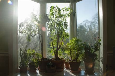 Indoor Plants Sunny Window Diarmuid Gavin Time To Green Up Indoors With Potted