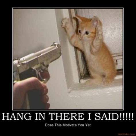 Hang In There Cat Meme - a murder of ravens update and a tour