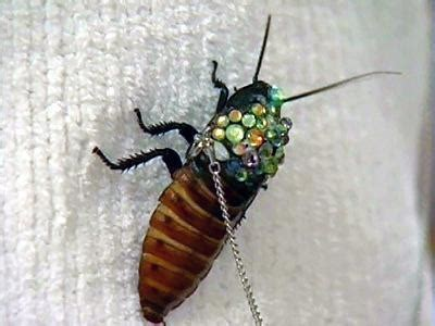 the roach brooch daring to wear live insect jewellery
