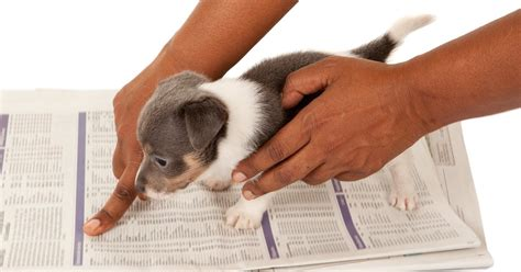 housebreak puppy image gallery housebreaking a puppy