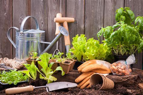 orto in giardino come fare come fare un orto in casa melarossa