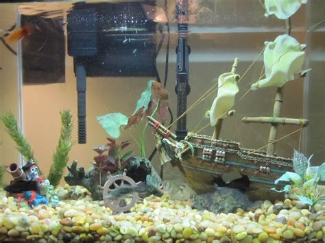Fish Tank Decorations by Ideas For Fish Tank Decoration I Am Is
