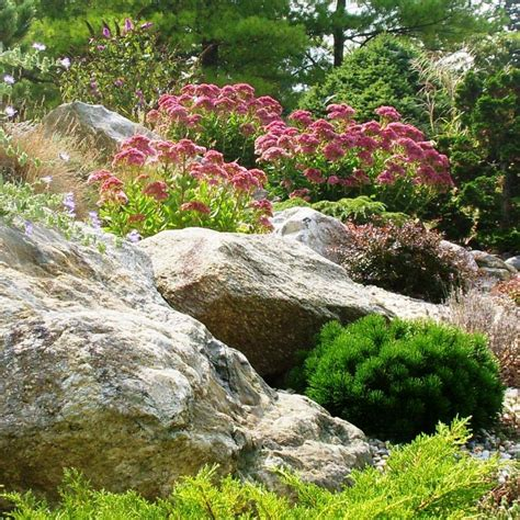 garden rock low water rock gardens hgtv