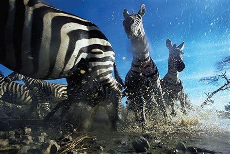 imagenes increibles e insolitas de la naturaleza increibles fotograf 237 as de naturaleza salvaje im 225 genes