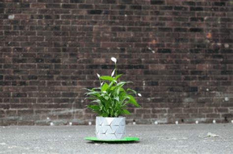 Plant Origami - no more repotting the origami pot grows with your plant