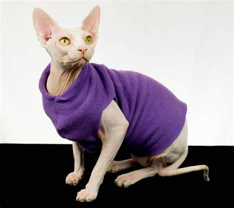 Sphynx Cat In Sweater   www.pixshark.com   Images