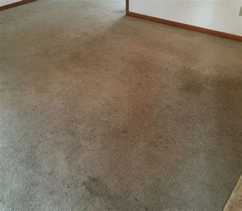 dirt carpet and rug shoo before after 187 carpet daddys