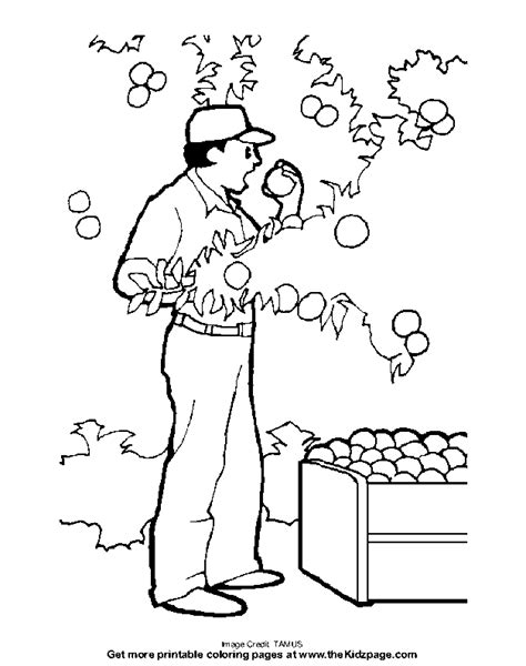 apple picking  coloring pages  kids printable