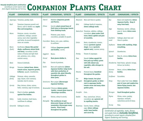 companion plants chart 25d154ae91635 effects kingston