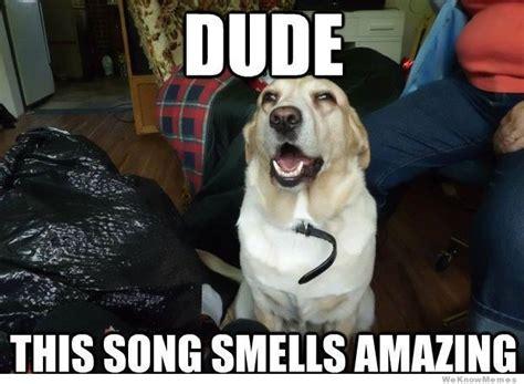 Best Weed Memes - weed dog meme