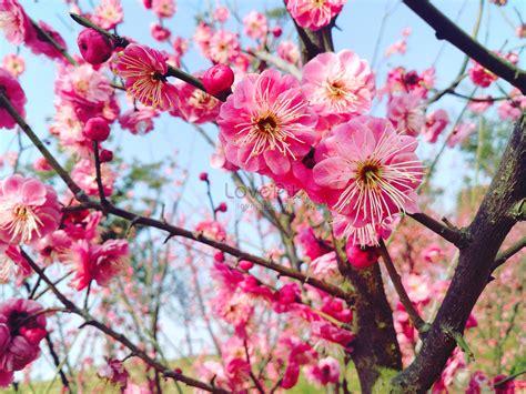 foto fiori primaverili fiori primaverili immagine gratis foto numero 500322681