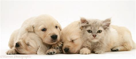 baby puppies and kittens baby kittens and puppies pictures to pin on pinsdaddy