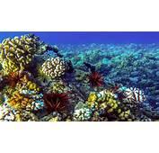 Ocean Seabed Reef Desktop Wallpaper Backgrounds Hd