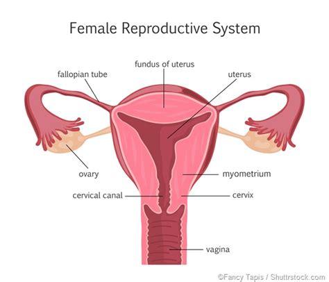 apparato genitale femminile interno types of adnexal tumors