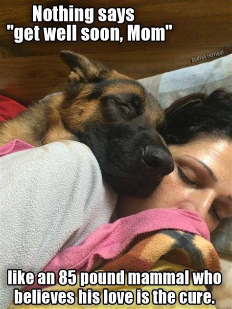 Dog Mom Meme - 1674 best images about german shepards puppies on