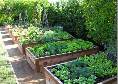 best raised garden 25 best raised vegetable gardens ideas on