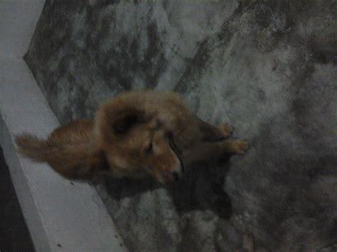 fotos de lionna fotos de perros