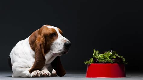 are peas for dogs what vegetables are for dogs pets world