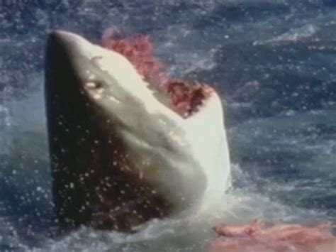 imagenes leones vs tiburones lion vs shark www imgkid com the image kid has it