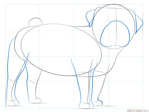 how to draw a pug step by step for how to draw a pug coloring