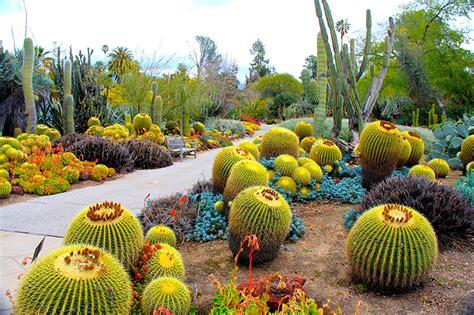 botanic garden california fonds d ecran usa jardins cactaceae botanical garden san