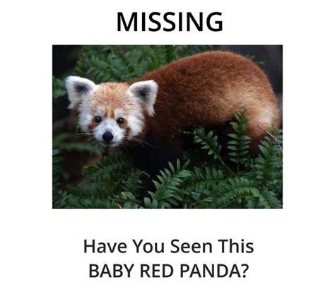 Red Panda Meme - image 566597 rusty the red panda know your meme
