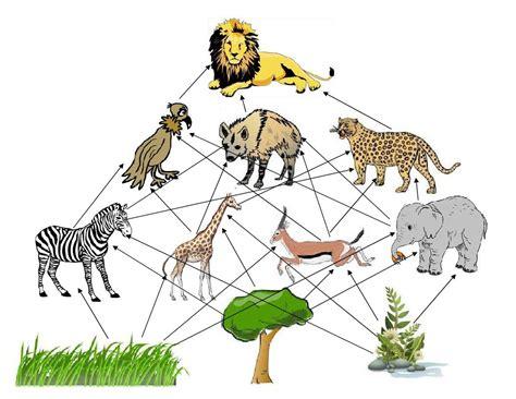 animal food chain diagram diagram savanna animal food chain diagram
