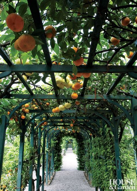 photograph hanging ideas hanging garden ideas pictures photograph orange tunnel gar