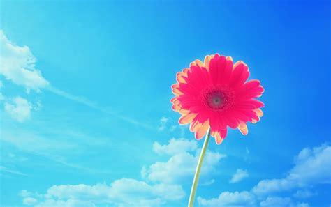 imágenes de flores wallpapers red flower under the blue sky wallpapers red flower