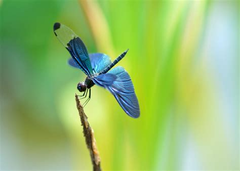 dragonfly desktop app free dragonfly wallpapers wallpaper cave