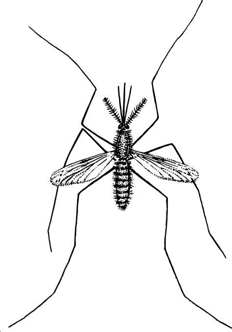 Mosquito clipart outline, Mosquito outline Transparent
