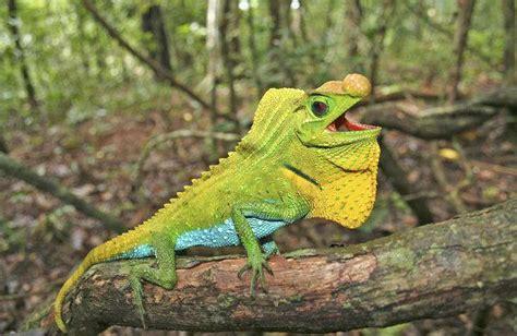 Reptile L by Pr 232 S De 19 Des Reptiles Sont Menac 233 S D Extinction