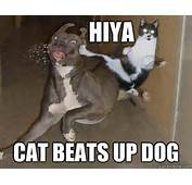 Cats Beating Up Dogs MEMEs