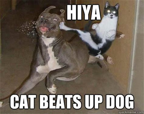 Dog And Cat Memes - cats beating up dogs memes