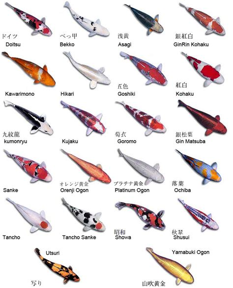 different types of fishes names list of fish names 2017 fish tank maintenance