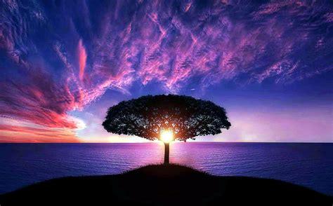 picture sun middle tree sunset  ocean purple sky